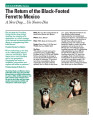 The Return of the Black-Footed Ferret to Mexico A New Day…Un Nuevo Dia