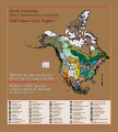 North American bird conservation initiative bird conservation regions map