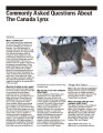 Commonly Asked Questions About The Canada Lynx