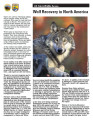Wolf recovery in North America