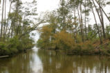 Straight down the slough.