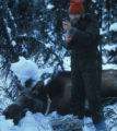 Moose telemetry work