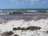 Oil slick comes ashore on Bon Secour National Wildlife Refuge.