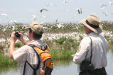 Biologists survey Breton National Wildlife Refuge