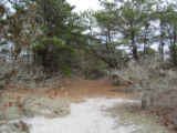 Path at Monomoy National Wildlife Refuge