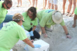 Turtle nest excavation and relocation