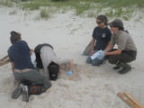 Sea turtle nest relocation