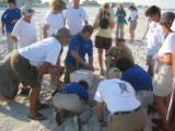 Sea turtle nest excavation