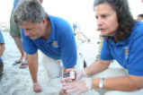 Sea Turtle egg relocation