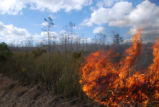 Prescribed cypress prairie burn