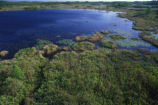 Wetland in Okefenokee National Wildlife Refuge