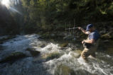 Fisheries technician uses radio antenna to track tagged bull trout.
