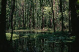 Forested Wetlands