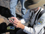 Assessment after Jamacha fire in San Diego National Wildlife Refuge