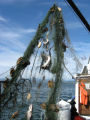 Derelict fishing gear with animal carcasses found by the USFWS Puget Sound Coastal Program.