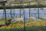 Whooping crane reintroduction facility