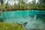 Three Sisters Springs area