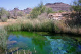 Kings Pool on Ash Meadows National Wildlife Refuge