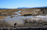 Flooding in the Ash Meadows National Wildlife Refuge
