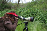 Birding on Stone Lakes National Wildlife Refuge during a docent led hike open to the public.
