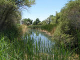 Corn Creek Springs on the Desert National Wildlife Refuge
