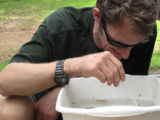 Workshop participant Brian Bock identifying macroinvertebrates
