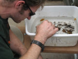 Workshop participant Brian Bock sorting macroinvertebrates