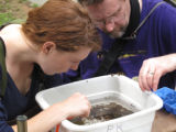 Workshop participants Liz Kessler and Michael Kenny sorting macroinvertebrates