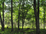 Densely Wooded Area