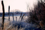 Lonely fence line