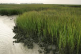 Wilderness marsh