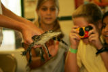 Children are amazed by a closeup view of a young alligator