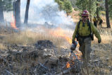Firefighter uses driptorch to apply fire during prescribed burn.