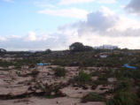 Laysan Island after the Tsunami