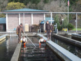 Removing Pre-smolts from Hatchery Raceways
