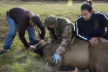 Skokomish Tribal Elk Monitoring Project