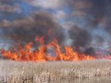Marsh burn at Tule Lake National Wildlife Refuge