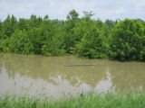 Mississippi: Ducks Unlimited sign, May 13