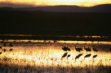 Sunset at Bosque del Apache National Wildlife Refuge