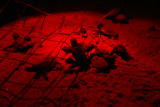 Baby loggerhead turtles hatching at night