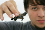 Volunteer with baby loggerhead turtle