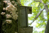 Northern Flying squirrel nest box