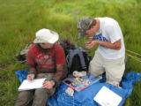 Forsythe interns conducting telemetry on Saltmarsh Sparrow