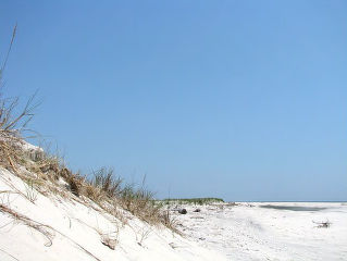 View of dune at Holgate Beach
