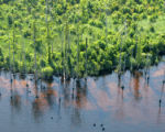 Climate impacts to Alligator River NWR