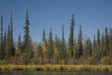 Wetlands at Yukon Flats National Wildlife Refuge
