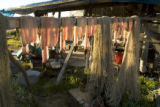 Preserving fish by drying in the sun