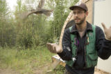 Release of Varied Thrush by U.S. Fish and Wildlife Service employee