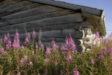 Wildflowers at the base of a wooden building