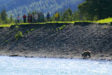 Bear interrupts fishing